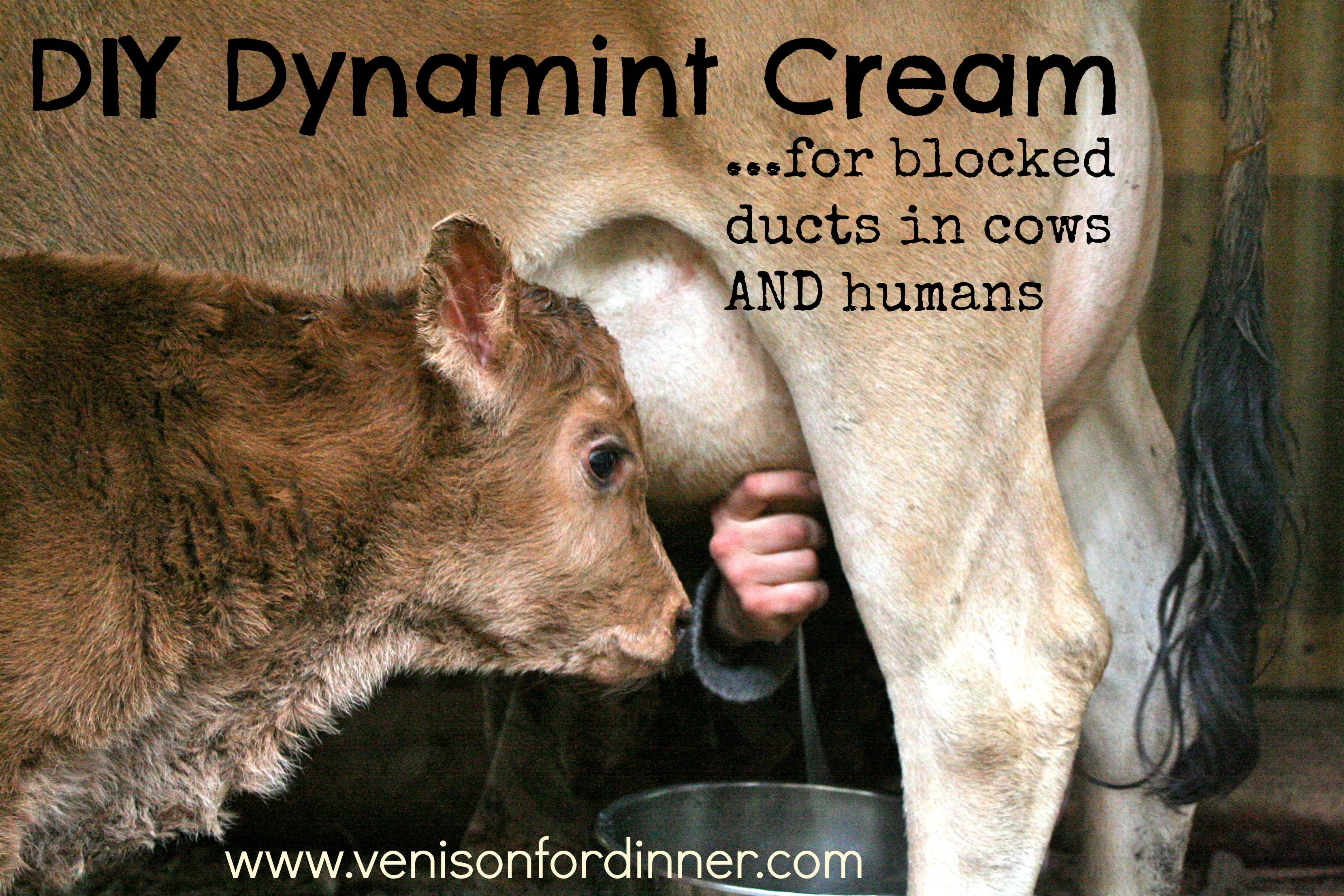 Homemade Dynamint Udder Cream